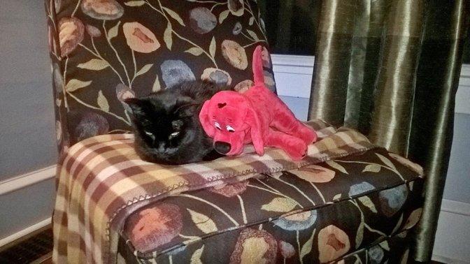 Cat Hospice